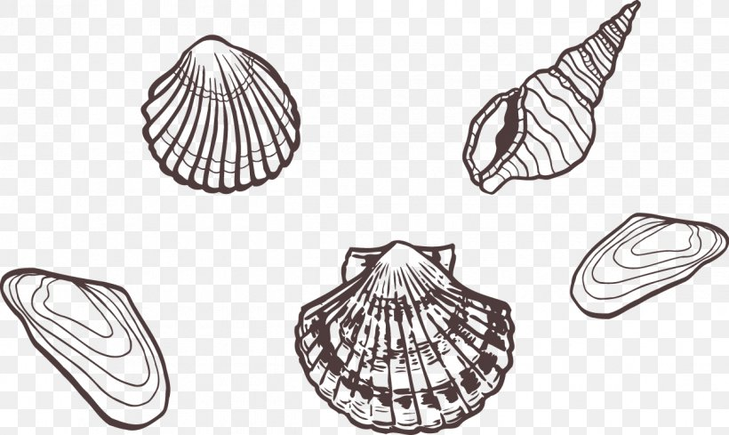 Sea Snail, PNG, 1249x745px, Sea, Artwork, Black And White, Designer, Drawing Download Free