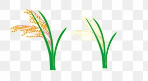Vector Rice And Wheat - Logo Grasses Leaf Plant Stem Font PNG