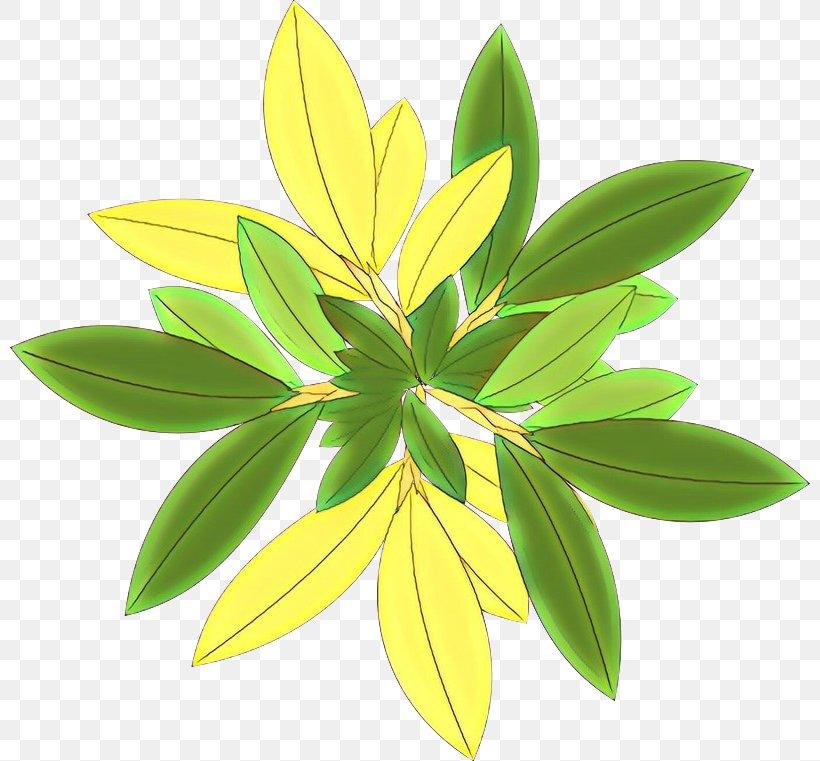 Plants Leaf Tree Plant Stem, PNG, 800x761px, Plants, Botany, Dishwasher, Flower, Flowering Plant Download Free