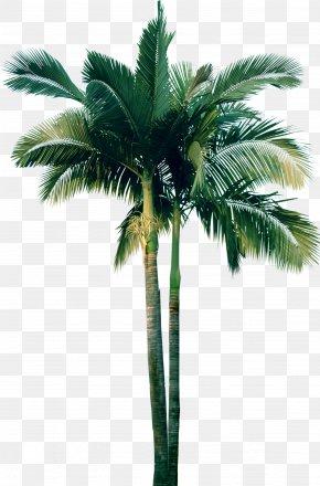 Palm Tree - Arecaceae Tree Plant Clip Art PNG