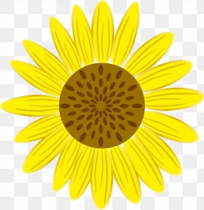 Sunflower - Symmetry Yellow Petal Pattern PNG