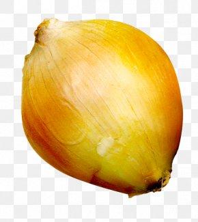 Ripe Onions - Onion Still Life Photography Fruit PNG