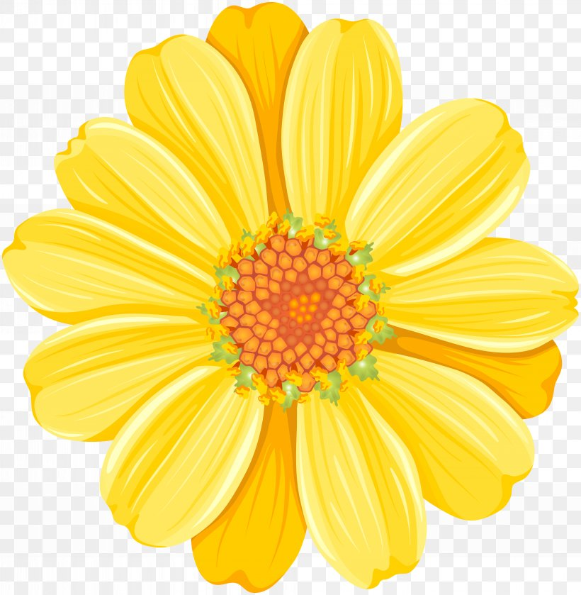 Yellow Daisy Festival Common Daisy Clip Art, PNG, 7816x8000px, Common Daisy, Argyranthemum Frutescens, Chrysanthemum, Chrysanths, Color Download Free