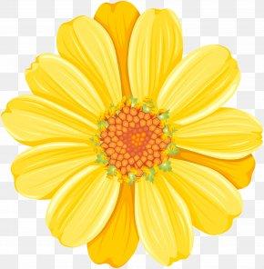 Yellow Daisy Transparent Clip Art Image - Yellow Daisy Festival Common Daisy Clip Art PNG