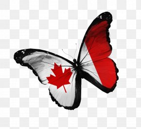 Creative Butterfly - Flag Of Canada Stock Photography National Flag PNG