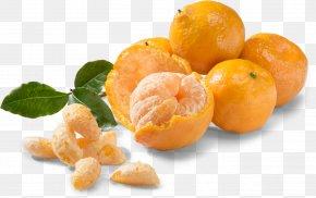 Dry Fruit - Mandarin Orange Tangerine Clementine Fruit Food PNG