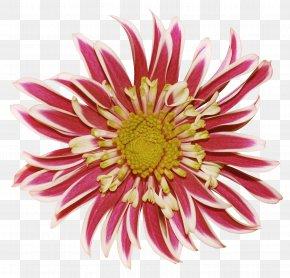 Pink Chrysanthemum Creative Chiba - Dahlia Chrysanthemum Flower Clip Art PNG