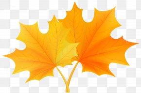 Fall Leaves Clip Art - Autumn Leaf Color Clip Art PNG