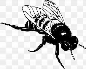 Bumble Bee - European Dark Bee Honey Bee Black And White Clip Art PNG