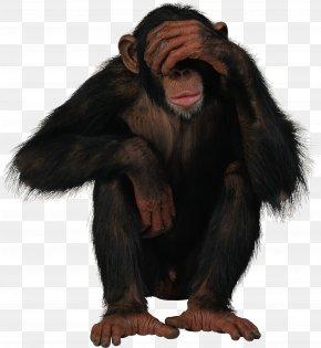 Monkey - Monkey PNG