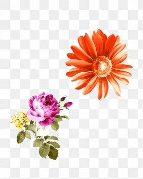 Chrysanthemum - Chrysanthemum Flower Clip Art Red Image PNG