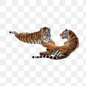 Tiger Tummy - South China Tiger Siberian Tiger Google Images Download PNG