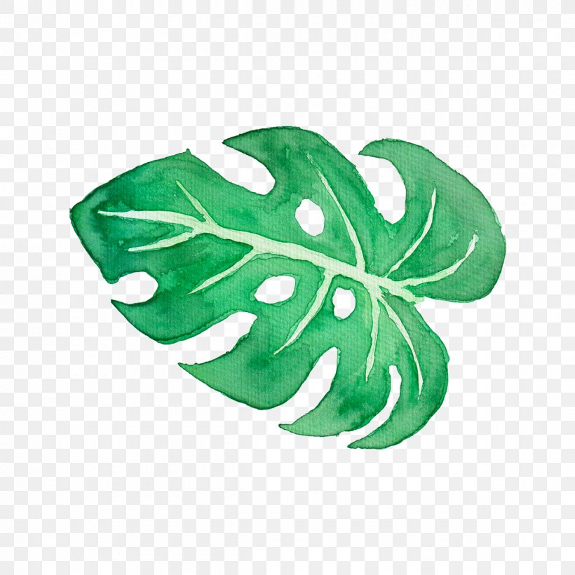 Leaf Watercolor Painting Tropics Clip Art, PNG, 1200x1200px, Leaf, Art, Art Museum, Drawing, Green Download Free