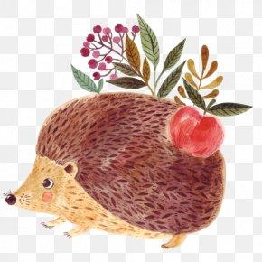 Vector Cartoon Hedgehog - Hedgehog Royalty-free Stock Photography Illustration PNG