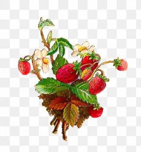 Vintage Flower - Wild Strawberry Strawberry Pie Fruit Clip Art PNG