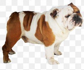 Bulldog Transparent - French Bulldog Pit Bull Pug IPhone 8 PNG