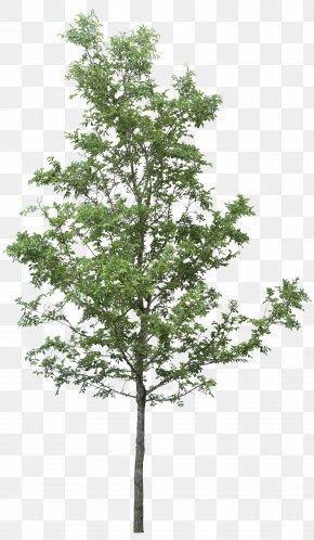 Tree Image - Tree DOT PNG
