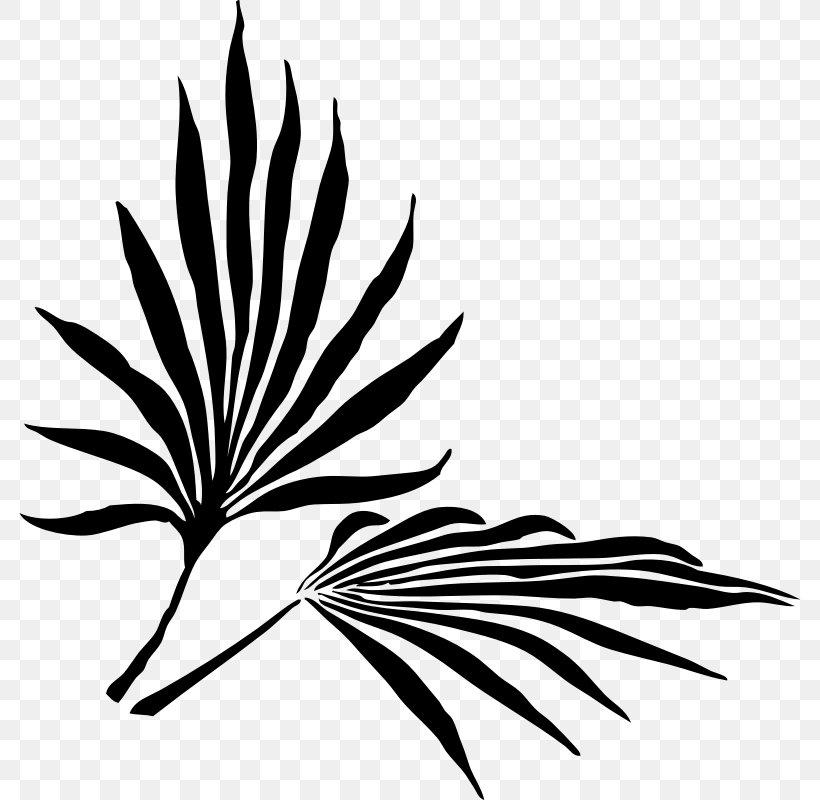Palm Branch Arecaceae Leaf Frond Clip Art, PNG, 800x800px, Palm Branch, Arecaceae, Black And White, Flora, Flower Download Free
