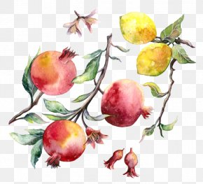 Pomegranate - Pomegranate Apple Watercolor Painting Drawing PNG
