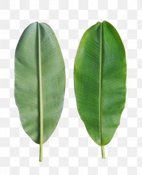 Banana Leaves Are On The Back - Banana Leaf Bánh Tét PNG