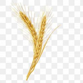Vector Wheat Grains - Emmer Cereal Grain PNG