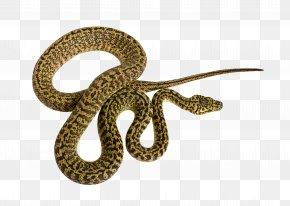 Patterns Of Snake Decorations - Corn Snake Reptile Morelia Spilota Mcdowelli Python PNG