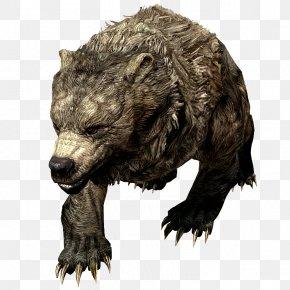 Pjs - Grizzly Bear Cave Bear The Elder Scrolls V: Skyrim – Dragonborn PNG