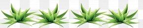 Leaf - Desktop Wallpaper Grasses Plant Stem Leaf Commodity PNG