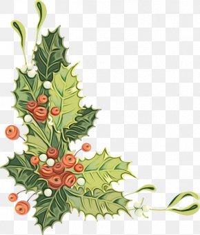 Colorado Spruce Twig - Holly PNG
