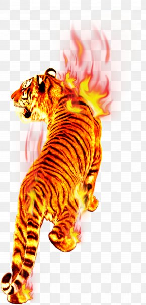 Tiger In Flames - Flame Fire Tiger Combustion PNG