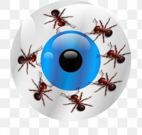 Ants - Insect Invertebrate Pest Christmas Ornament Eye PNG