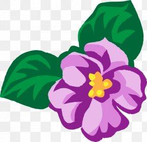 Violet Transparent - African Violets Viola Cucullata Clip Art PNG