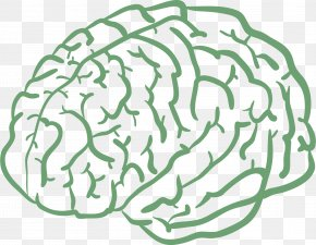 Cartoon Hand Drawing Human Brain - Human Brain Drawing Cartoon Agy PNG