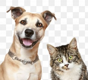 Pet Dog Cat - Dog Cat Puppy Pet Sitting PNG