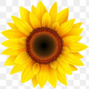 Sunflower Clipart Picture - Common Sunflower Pixel XCF PNG
