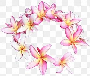 Plant Petal - Frangipani Flower Pink Petal Plant PNG