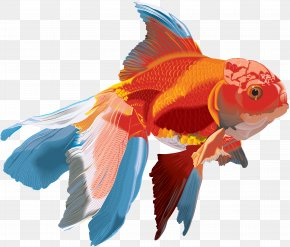 Creatures - Goldfish Watercolor Painting PNG