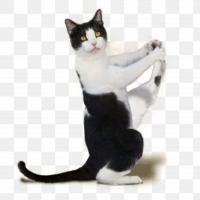 Kitten Material Map Material - Yoga Cats: The Purrfect Workout Kitten Yoga Dogs PNG