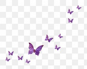 Butterfly - Fly Butterfly Clip Art PNG