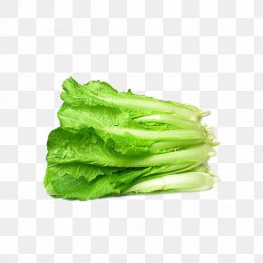 Fresh Cabbage - Bok Choy Napa Cabbage Chinese Cabbage Vegetable Canola PNG