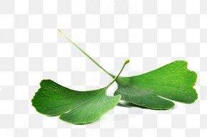 Leaf - Ginkgo Biloba Leaf Health Food Nutrition PNG