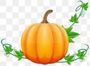 Pumpkin - Pumpkin Pie Vegetable Clip Art PNG