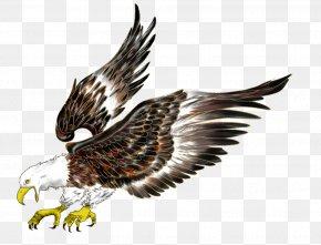 bald eagle flight hawk bird png favpng yBiKXrdxF4K7uVV9qpDC2Ffg6 t