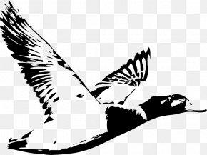 Duck - Duck Waterfowl Hunting Logo Water Bird PNG