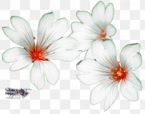 Flower - Flower Garden Drawing PNG