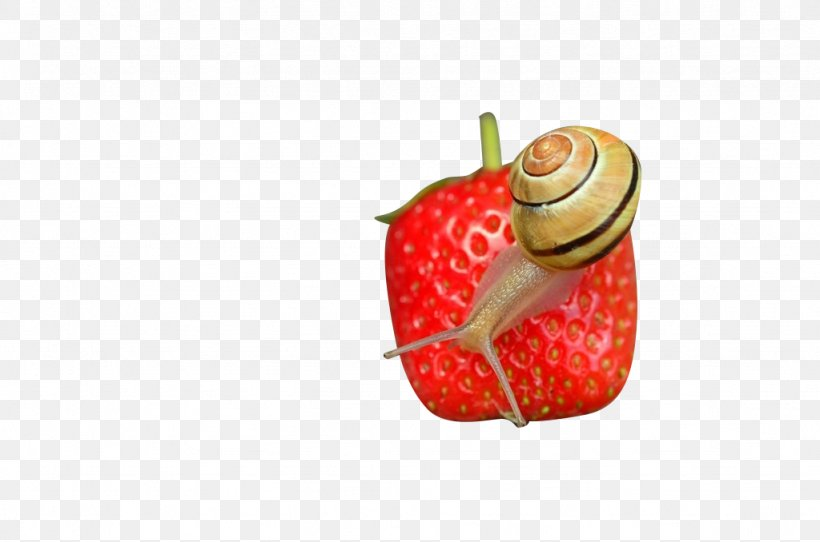 Strawberry Microscope Icon, PNG, 1024x678px, Strawberry, Aedmaasikas, Food, Fruit, Google Images Download Free