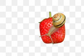 Strawberry Snail - Strawberry Microscope Icon PNG