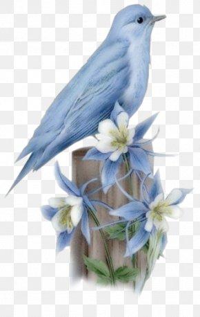 Birds - Hummingbird Bluebird Of Happiness PNG