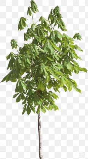 Leaf - Branch Leaf Tree Evergreen PNG