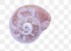 Shell Pink - Pink Shell PNG